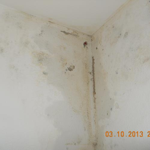 Wet wall with fungus and drill holes.JPG